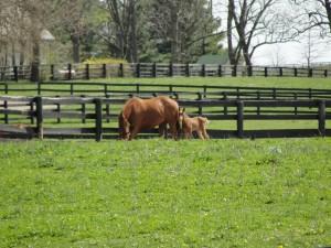 Photo of horses by Matthew Davidson